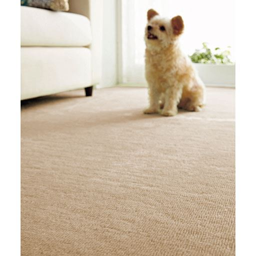 ペット対応!消臭・カットパイルカーペット 犬や猫がストレスなく歩ける6mmカットパイル仕様の商品画像