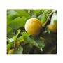なめらか肌のための美肌成分<br>保湿成分のハトムギ成分(ヨクイニンエキス)<br>昔から飲用されてきた成分。<br>※イメージ