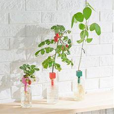 ペットボトル水耕栽培用種子/3種セット(プチトマト・四季なりイチゴ・枝豆)