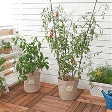 ベジタブルトートバッグ/家庭菜園キット(トートバッグ型)