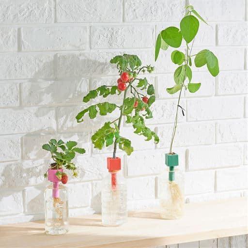 ペットボトル水耕栽培用種子/3種セット(プチトマト・四季なりイチゴ・枝豆) - セシール ■サイズ:A(3種セット)