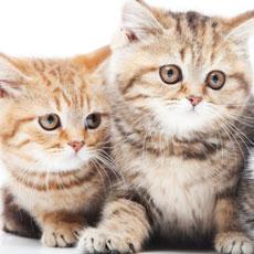 猫好きなあの人に、私に、プレゼント。おすすめ猫グッズ、猫柄アイテム10選