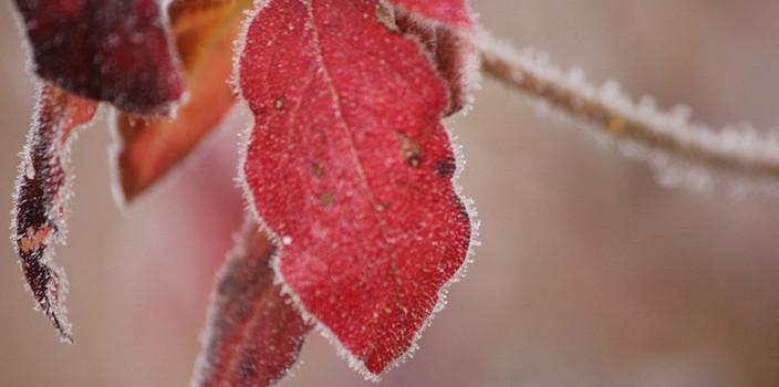 本格的な冬がくる前に、早めの防寒対策!防寒グッズとアイデアで窓、部屋を暖かく